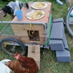 poule itinerante